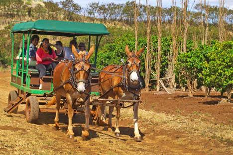 Molokai Vacations And Travel Information